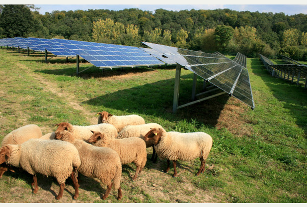 pics of bourn solar farm, which could be the UK's biggest solar energy farm